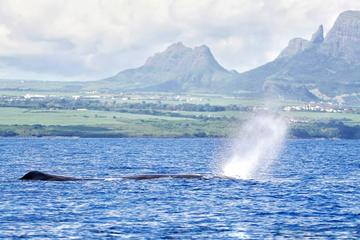 Swim With Wild Dolphins & Whale Watching With Breakfast & Transport