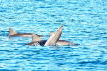Swim with Wild Dolphins on Benitiers Island: Day Tour from Port Louis