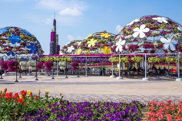 Miracle Garden with Transfers from Abu Dhabi