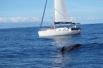 3 uur lang walvissen en dolfijnen spotten op zeiljacht met groep