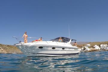 Private Motorboot-Charter zur Walbeobachtung in Teneriffa