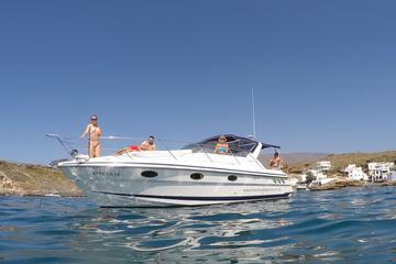 Private Wal- und Delfinbeobachtung im Motorboot - Ganztägige Charter