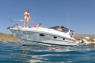Private Wal- und Delfinbeobachtung im Motorboot - Halbtägige Charter