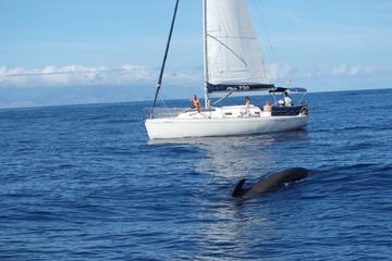 Whale and Dolphin Watching Sailing Yacht Small Group Charter