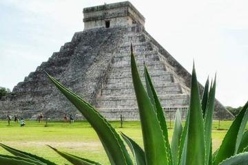 Coba and Chichen Itza Private Tour with Lunch, Cenote Ik Kil