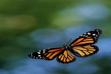 Monarch Butterfly Sanctuary Private Tour from Mexico City