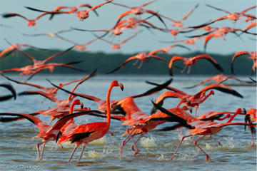 Private Tour: Ek Balam and Pink Flamingoes Sanctuary with Photographer from Cancun, Tulum or Riviera Maya