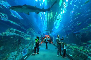 Eintrittskarte für Underwater Zoo, Dubai Aquarium und Eisbahn