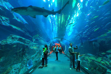 Underwater Zoo Dubai Aquarium And Ice Rink Entrance