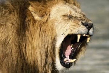 Big Cat Safari Kenya and Tanzania