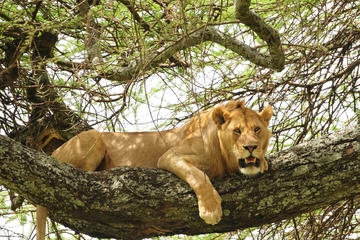 3-Day Safari Tour to Tarangire National Park, Lake Manyara National...