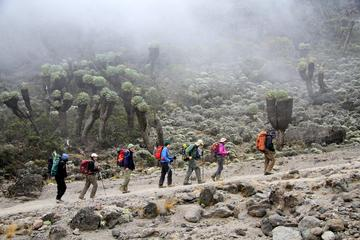 7-Day Mount Kilimanjaro Trek Via...