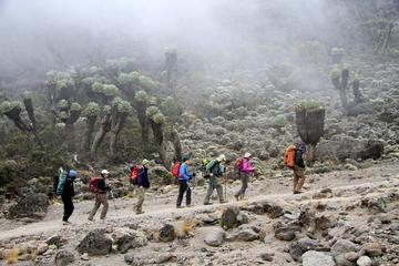7-Days Mount Kilimanjaro Trekking Via...