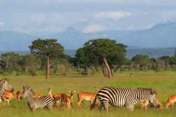 3-Day Safari in Mikumi National Park