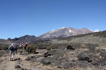 Courte randonnée au mont Kilimandjaro...