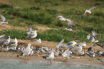 Full-Day Bird Watching Guided Tour To...