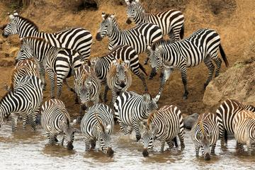 Full-Day Safari in Tarangire National...