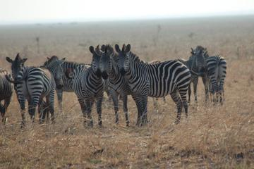 Mikumi National Park Guided Safari...