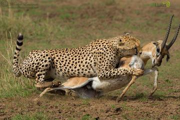 3-Day Maasai Mara National Park Safari from Nairobi