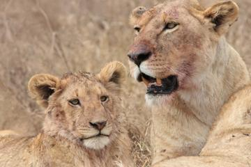 3-Day Safari to Ngorongoro Crater Tarangire and Lake Manyara National...