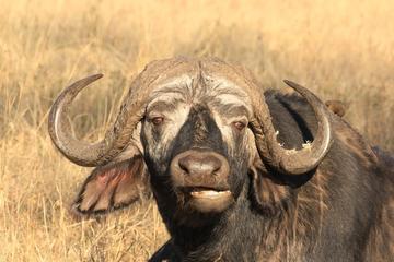 4-Day Wildlife Adventure from Arusha
