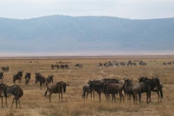 5 Days Tanzania Budget Camping Safaris