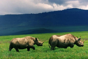 Full-Day Day Trip to Ngorongoro Crater From Arusha Town