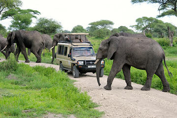 Full-Day Safari to Tarangire National...
