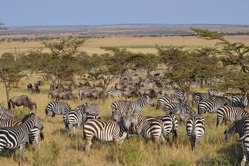 Great Serengeti Migration Trail