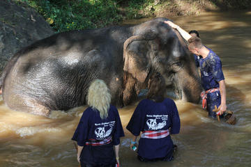 3-Day Thai Elephant Care Camp Experience from Chiang Mai