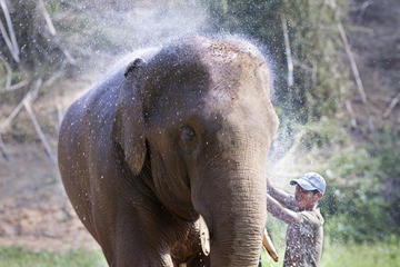 Elephant Camp Tour including Elephant Ride from Krabi