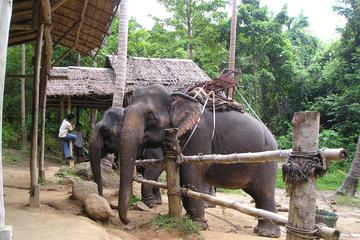 Excursion au camp des éléphants et safari en jeep avec déjeuner au...