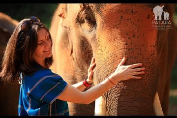 Experiência em fazenda com elefantes...