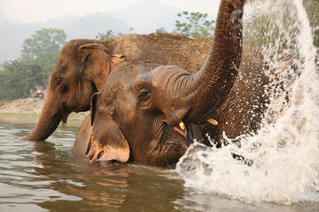 Full-Day Baan Chang Elephant Park Experience from Chiang Mai