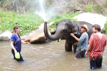 Full-Day Ran-Tong Elephant Park Experience from Chiang Mai
