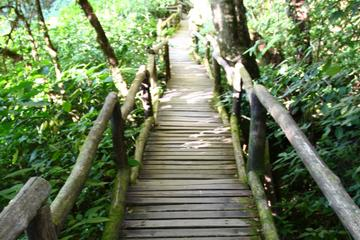 Private 8-Hour Tour of Doi Inthanon National Park including Lunch...