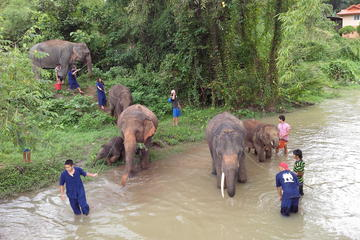 Tong Bai Elephant Foundation Day Trip from Chiang Mai