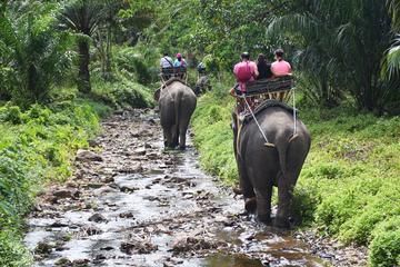 Safari a las cataratas de Huay Tho con caminata en elefante y baño en...