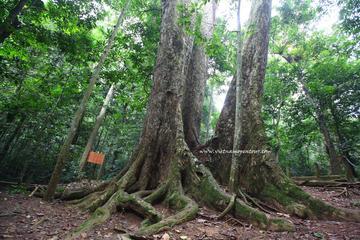 Cuc Phuong Nationalpark - Tagestour von Hanoi