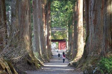 戸隠の自然を楽しむハイキングと忍者1日ツアー