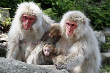 Snow Monkey and Shiga-kogen Highlands Hiking Day Tour