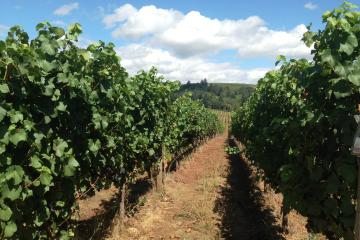 Willamette Valley Wine-Tasting from...