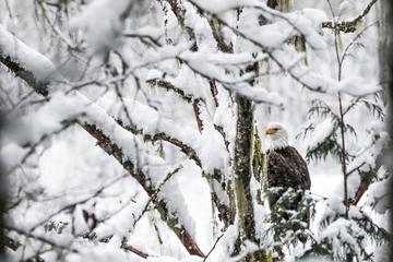 4-Hour Eagle Viewing River Float Trip From Squamish with Lunch