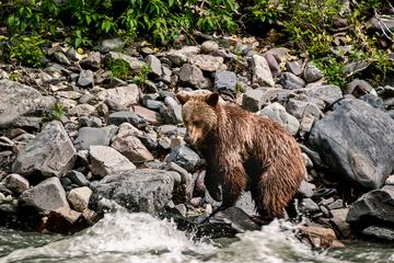 Day Trip 6-Day Babine River of Grizzlies Expedition near Smithers, Canada