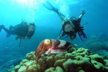 Diving At Galleon and Chimney From...