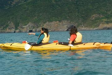 Shore Excursion: Scenic Cruiser Sea Kayaking Safaris in Akaroa