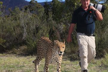 Cheetah Walk and Wild Cat Experience