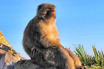 Lo más destacado de Gibraltar: Visita turística guiada de un día...