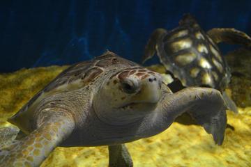 Visite touristique de Séville avec entrée pour l'aquarium et...
