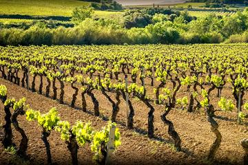 Private Cava Experience Penedes Tour From Barcelona